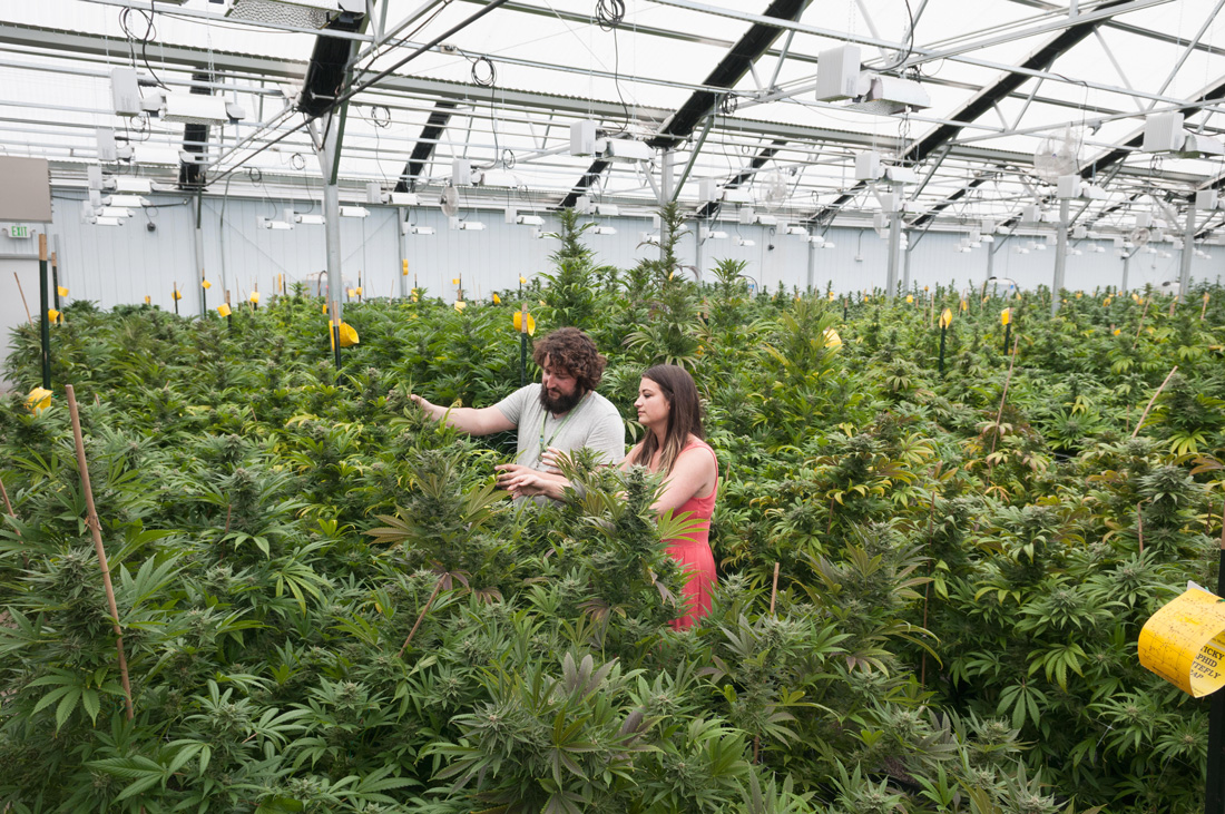 a man and woman look at cannabis plants