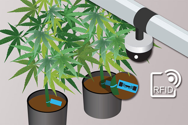 An animated graphic of cannabis plants tagged with RFID tags and a security camera.